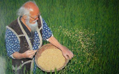 Tamiser l'argile, enrober des graines, respecter la terre.