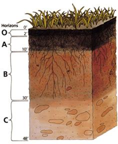 schéma montrant les différents horizons du sol