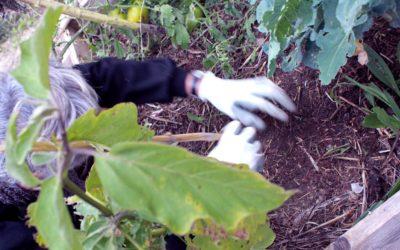 3 classiques de la permaculture pour l'abondance au jardin