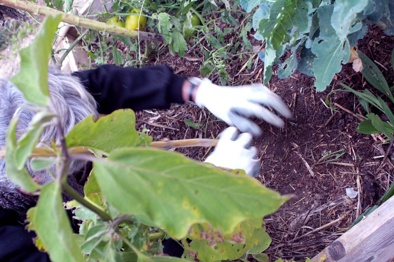 jardinier avec des gants grattant à la surface du sol