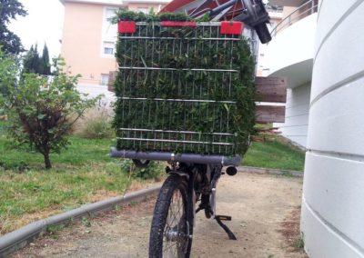 velo cargo_transporter de la tonte (6)
