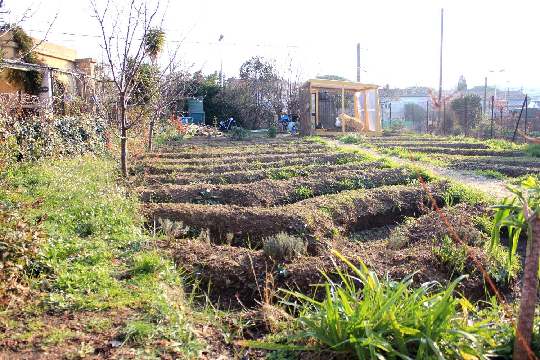 photo du jardin d'eric avec des buttes et au loin la serre en cours de construction, sous un beau soleil d'hiver