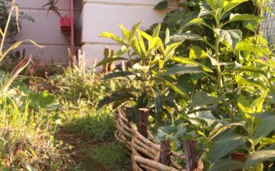 11 Ateliers dans les jardins d'Hérault pour découvrir la Permaculture