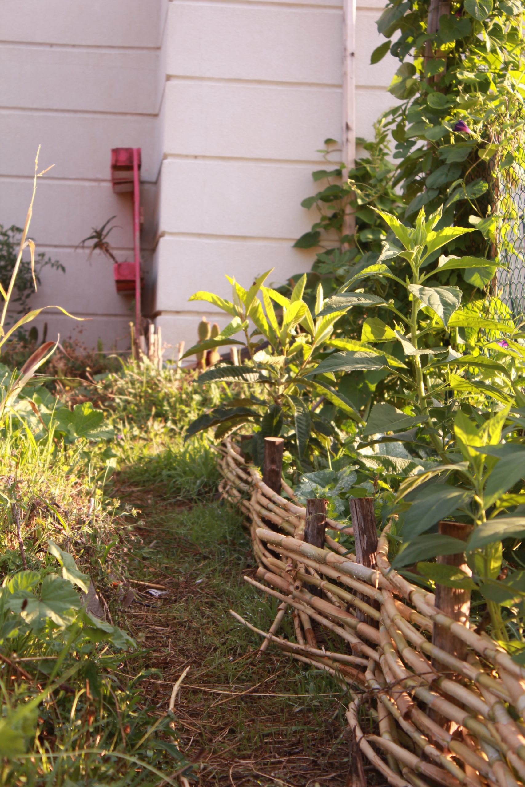 photo d'un jardin partagé en hérault