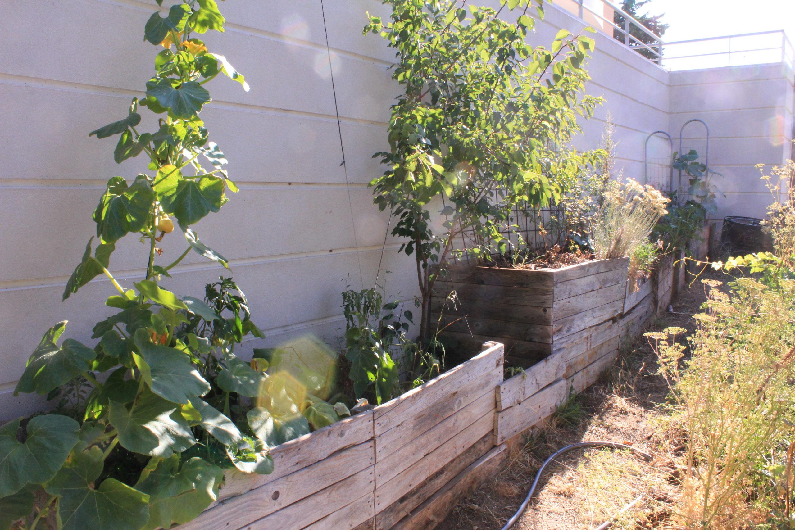 vue large de plate-bandes de culture avec différentes strates végétales : courges et arbres fruitiers