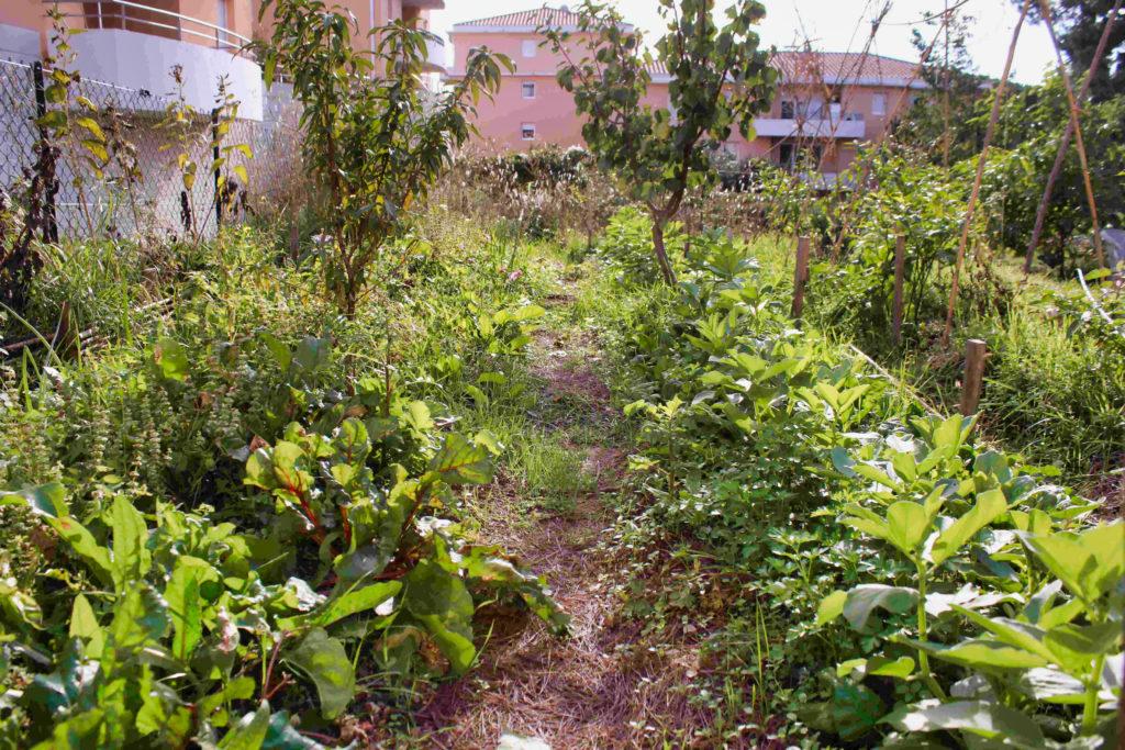 planche permanentes de cultures dans un jardin résidentiel partagé, cultivées avec des arbres