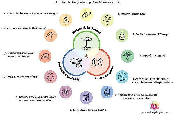 Schéma en couleur des 12 principes de la permaculture par David Holmgren