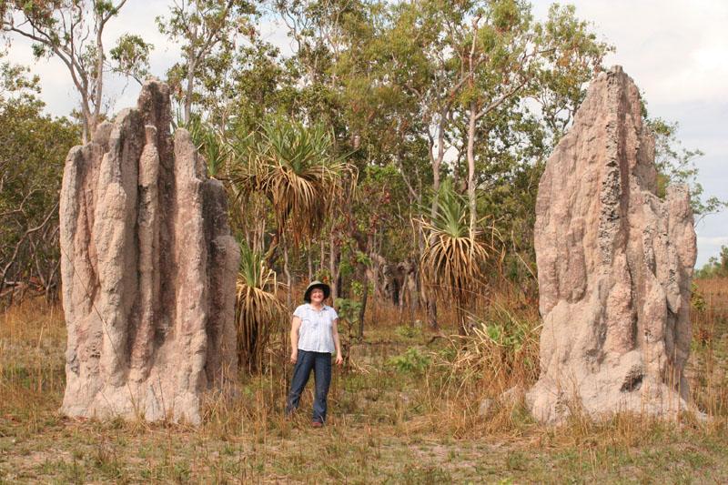 une termitière vue de dehors