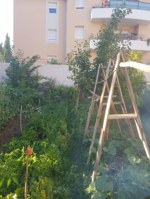 photo d'un jardin qui produit en abondance et respecte les équilibres naturels