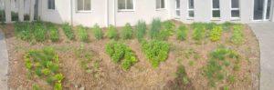 jardin mandala en entreprise