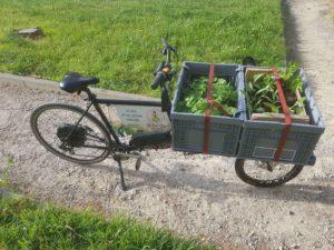 plantation en potager d'entreprise par vélo cargo