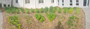 vue panoramique d'un jardin mandala en entreprise