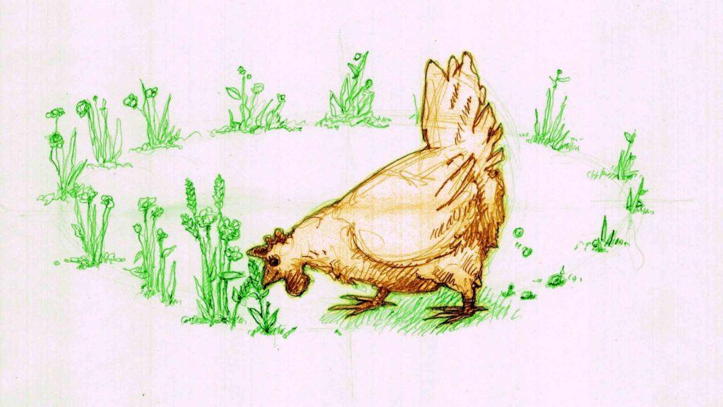 dessin d'une poule consommant en boucle des plantes tirées d'un jardin, qu'elle défèque sous forme d'engrais pour ce dernier. Un bon exemple d'emplacements relatifs.