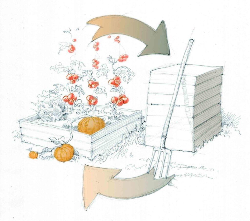 dessin d'un composteur placé à côté d'une zone de culture avec tomates et courges. deux flèches illustrent l'intérêt de cet emplacement relatif.